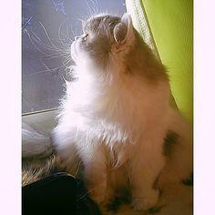 うちに来てもうすぐ1年。うちの子になってくれてありがとうね。今日は猫の日。 #猫の日 #ありがとう #愛猫  #ねこ好きさんと繋がりたい  #にゃんこ #ねこのきもち #こねこ #ぬこ部  #にゃんだふるらいふ  #にゃんすたぐらむ #ふわもこ部  #ふわふわ #もふもふ #ぬこ  #ねこのいる暮らし #ねこのいる生活 #癒し #家族 #宝物 #catstagram  #cat #kitty  #love  #instacat #photocat #family #february22 #catday in japan