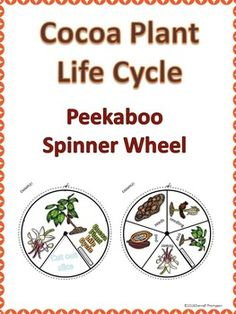 "Cocoa Plant ""Life Cycle"" (Peekaboo Spinner Wheel)"