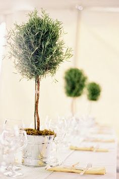 Topiaries add a touch of elegance even to the simplest setting.