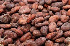 cocoa liquor / Cocoa Beans