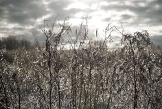 Winter, dramatic sky, ice crystals