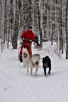 Mushing thru the snow....Mushing, or dog sledding at Wolfsong near Bayfield, WI