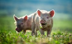 5 Inspiring New Films That Will Change The Way We Eat | Care2 Causes