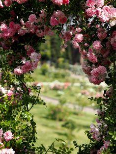 Ruusutarha Roomassa - Fabulous Things   Lily.fi