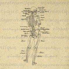 Printable Human Skeleton Diagram Graphic by VintageRetroAntique