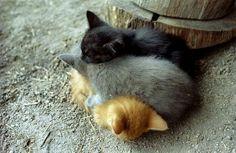 【画像】お互いを枕にして眠る動物が可愛すぎるwwwwwww