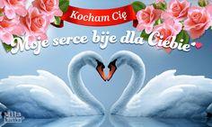 Moje serce dla Ciebie #miłość #kochanie #kartki #walentynki #serce #okolicznościowe #polska #poland #pocztówki #dlaCiebie #love #kwiaty #łabędzie #swans #valentines Swan, Valentines, Amor, Cool Things, Valentine's Day Diy, Swans, Valentines Day, Valentine's Day
