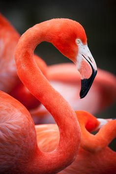 ~~Flamingo by Justin Lo~~