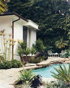 palms + pool // backyard #outdoor #patio