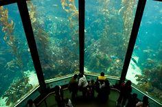 acuario de la Bahía de Monterrey