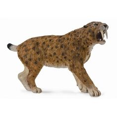 """The Smilodon is an extinct predatory mammal characterized by long, curved saber-shaped canine teeth. Size: 12.5cm x 8cm Fun Facts: Although commonly referred to as """"sabre tooth tigers"""" they are actual"""