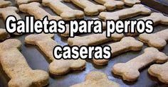 Cómo hacer galletas caseras para perros