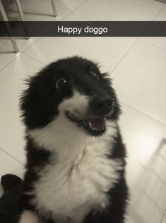 Funny Snapchats Dog Photo - 190 Pics – Funnyfoto | Funny Pictures - Videos - Gifs - Page 52