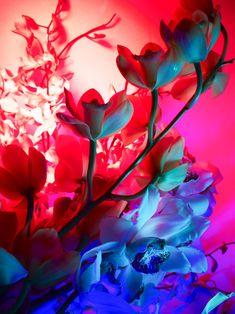 As flores neon de Torkil Gudnason Vaporwave, Neon Noir, Hothouse, Neon Aesthetic, Real Flowers, Neon Lighting, Oeuvre D'art, House Colors, Les Oeuvres