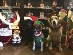 The gang at Christmas.