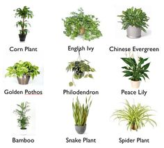9 Houseplants that clean the air, since the Indoors can be toxic. These are easy-to-grow, add beauty, and scrub the air!  What's not to love?  More info at http://tlcclean.com