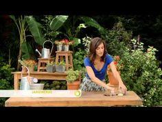Dale hierro a tus plantas - YouTube