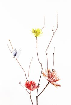 Fan Flower Branch by CONFETTISYSTEM. Photo by CONFETTISYSTEM