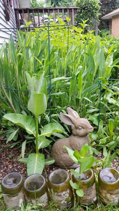 20170520_bunny with common milkweed