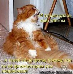 приколы с котами с надписями: 19 тыс изображений найдено в Яндекс.Картинках