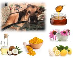 Natural Herbal Cough Syrup Recipe for Dogs  This natural herbal cough syrup recipe is made with ingredients most dogs love. If your dog has a cough due to a viral infection such as a doggie cold or flu, this cough syrup recipe can help sooth your dog's cough, and help fight the virus, without the side effects of, and toxins in conventional drugs...