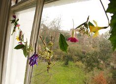 Window flowers lovliness