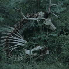 34 Ideas For Photography Dark Creepy Gothic Monster Falls, Half Elf, The Wicked The Divine, Arte Obscura, 3d Fantasy, Dark Fantasy, Southern Gothic, Necromancer, Dark Forest