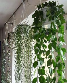 top hanging plants tips! - Garden Easy - 20 top hanging plants tips! 20 top hanging plants tips! # hanging plants The post 20 top han - House Plants Decor, Garden Plants, Indoor Plants, Herb Garden, Indoor Plant Decor, House Plants Hanging, Balcony Plants, Diy Garden, Balcony Garden