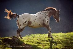 Wiebke Haas | animal photography » Equine Art