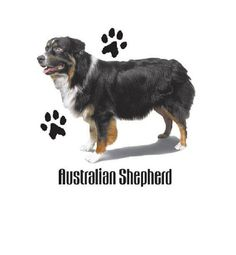 Australian Shepherd T SHIRT, ( Sweatshirt, Quilt Fabric Block, Tote Bag, Apron, Available On Request) #803f  Choose a custom short or long sleeve t-shirt. Additional available products are; sweatshirt, fabric quilt block, apron, tote bag, and hoody. Some designs available in youth sizes. Please contact me with questions.  Design will be printed on the front of the garment unless otherwise requested. The exception to this is hoodies where zippers and pockets obstruct the printing space. This…