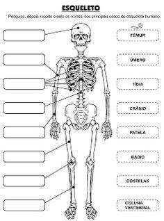 JARDIM COLORIDO DA TIA SUH: Diversas Atividades para do Corpo Humano Science Worksheets, Science Lessons, Science For Kids, Science And Nature, Skeletal System Activities, Senses Preschool, Math Measurement, Human Body Systems, Medical Anatomy