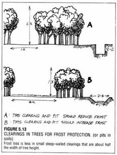 Clearings in trees for frost protection. Permaculture Design Ideas #livingecology #permacultureinternship