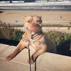 Itty Bitty Happy Pitty, in the sand, gettin' gritty,