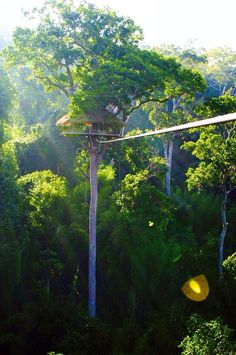 Trekking in the jungle of Laos, sleeping in tree houses, and zip lining through the canopies. Here is an insight of why you should do the Gibbon Experience.