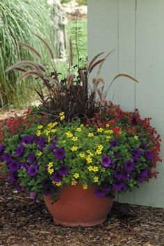 Solaire Yellow Bidens, Sunsatia Cranberry Nemesis, Supertunia Royal Velvet Petunia, Purple Fountain Grass. Front porch