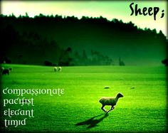 Chinese Astrology :: Sheep