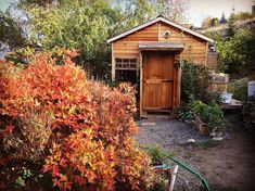 Guide to Tiny House Living Shed To Tiny House, Tiny House Cabin, Tiny House Living, Backyard Guest Houses, Cool Fire Pits, Cedar Homes, Fire Pit Area, Diy Shed, Tiny House Movement