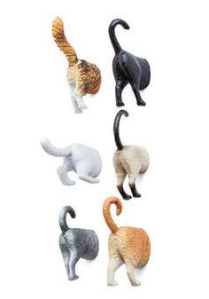 Posterior Design Magnet Set in Cats. LOL!