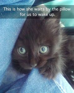 Some cats are such sweeties not to wake us! My Bailey was like that. And we had adopted him when he was 5 yrs old - definitely not a meek little kitten!