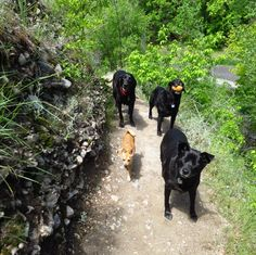 Squad day out! - Freedom Trail at Memory Grove Park - Salt Lake City, UT - Angus Off-Leash