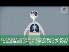 Wanneer je hoest, verkoudheid of een verstopte neus hebt, grijp dan niet eerst naar commerciële medicijnen nog voordat je het probleem op een natuurlijke manier probeert te behandelen. Er zijn