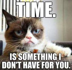 Grumpy Cat - ME memes!