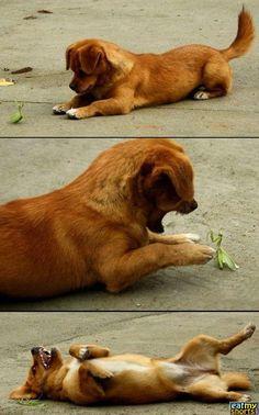 puppy v praying mantis!!