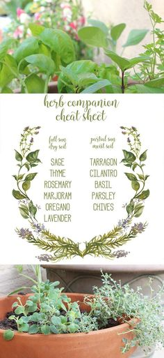 Plant your own herb garden with this herb companion cheat sheet printabl.e