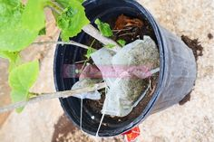 Genius Ways To Reuse Old Tea Bags Around The Home - Grapes and Splendor Diy Home Cleaning, Cleaning Wood, Bathroom Cleaning Hacks, Household Cleaning Tips, Deep Cleaning Tips, Cleaning Recipes, House Cleaning Tips, Natural Cleaning Products, Teeth Cleaning