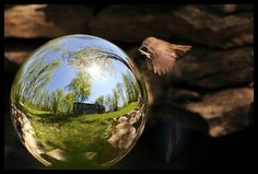Mirror Reflection Photography | Amazing-photos-of-mirror-and-reflection-photography-32_large