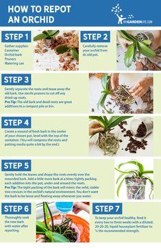 How to Repot an Orchid | My Garden Life Indoor Orchid Care, Orchid Plant Care, Indoor Orchids, Orchids Garden, Garden Plants, Indoor Plants, House Plants, Indoor Herbs, Veg Garden
