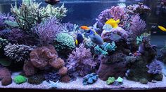 1500 liter mixed reef tank - has dozens of gorgeous, detailed photos of the tank including closeups of certain corals Reef Aquarium, Saltwater Aquarium, Aquarium Fish Tank, Fish Tanks, Salt Water Fish, Salt And Water, Reef Tanks, Tropical Fish, Live Plants