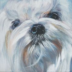 "Maltese dog portrait art Canvas PRINT of LAShepard painting LSHEP 12x12"" | Art, Direct from the Artist, Prints | eBay!"