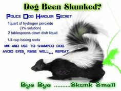 It's Skunk Season! Seems everyone's Dogs are getting it this week! lol So many have asked me how to get rid of Skunk Smell I figured I better repost! New Puppy, Puppy Love, Getting Rid Of Skunks, Skunk Spray, Skunk Smell, Police Dogs, Pet Treats, Dog Care, Mans Best Friend